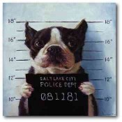 Bad Doggy 50